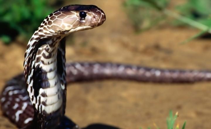 Туриста арестовали после убийства змеи камнем