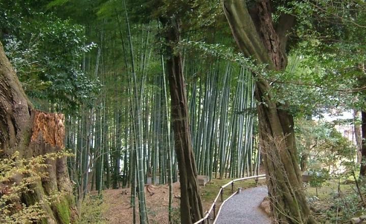 Киото- Город Сказка!!!
