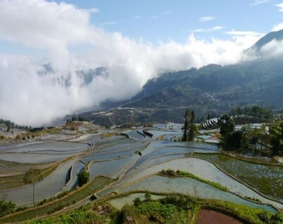 Рисовые террасы Ян-Янг