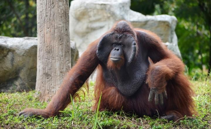 Истории зоопарка в Чианг Мае