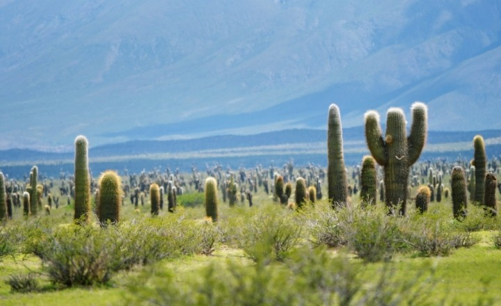 Улыбки кактусов на севере Аргентины