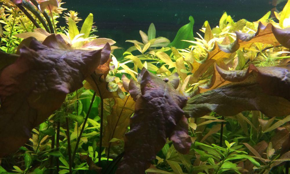 Поход в Петербургский океанариум и мооооре впечатлений
